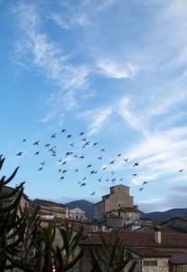 passaggio di piccioni..