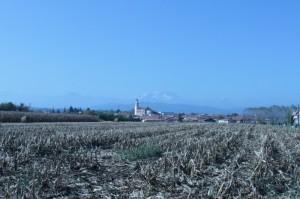 In campo di granoturco a Cressa