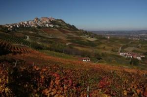 Le colline si colorano - La Morra