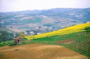 le campagne di Nizza Monferrato