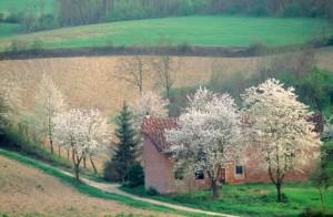 Primavera nelle campagne di Piobesi d'Alba