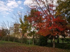 Nascosto .. nell'autunno