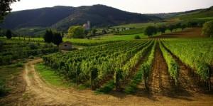 Sant'Antimo e le vigne