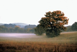 Carso, nebbia al tramonto