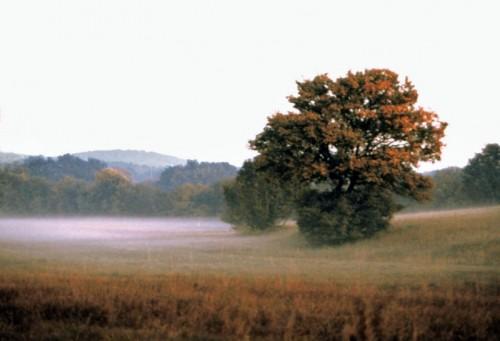 Sgonico - Carso, nebbia al tramonto
