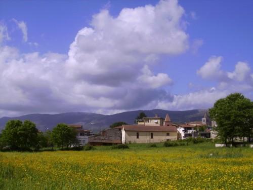 Amaseno - tappeto di fiori gialli