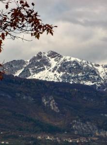 Patone con lo sfondo del monte Stivo