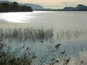 Pescate sul lago di Garlate
