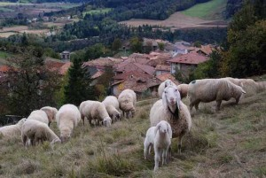 Pecorelle curiose