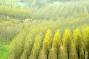 e gli alberi si colorano di giallo