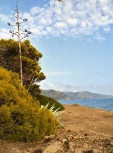 Punta Licosa…spettacolo naturale