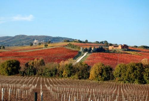 Gualdo Cattaneo - Le vigne del Sagrantino