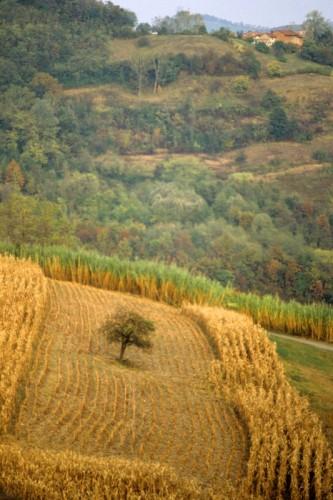 Moransengo - autunno a moransengo