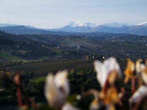 Petriolo - Fiori e monti