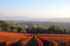 Le vigne di Pietrauta