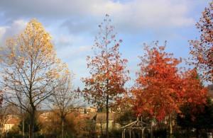 Contrada tra le foglie rosse