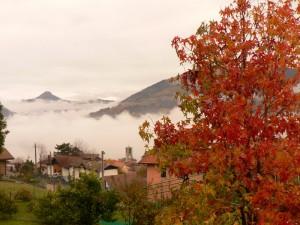 colori tra la nebbia