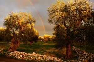 un arcobaleno di colori tra l'argento degli ulivi