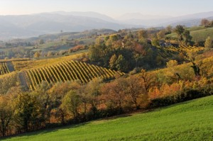 Colline di Torrechiara