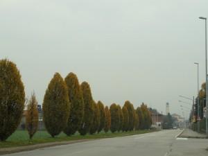 Novembre in Val Padana