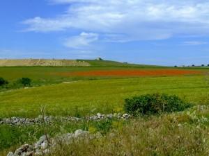 Castellaneta: campagna in primavera