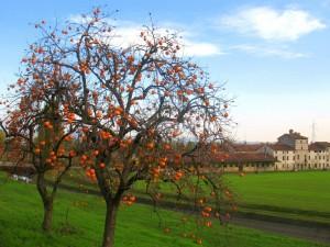 Colori d'autunno a Ca' Sorio