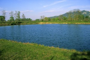 Il lago di Brandizzo