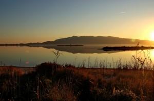 Laguna di Orbetello - Non è una silouette!!!