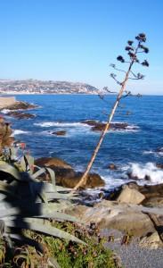 Panorama marittimo ed agave