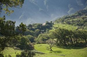 Paesaggio d'Aspromonte