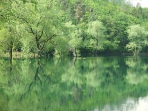 Esuberante verde