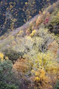 I colori del Monte Catria