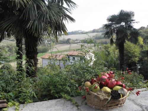 Ozzano Monferrato - Palme in Monferrato