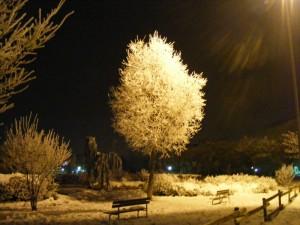 una notte nel parco di San Giovanni