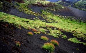 I fiori del vulcano (II°)