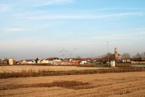 Tra grano e piccioni