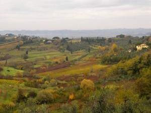 Terricciola - Colori d'autunno (1)