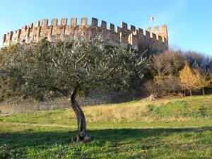 L'albero…incoronato