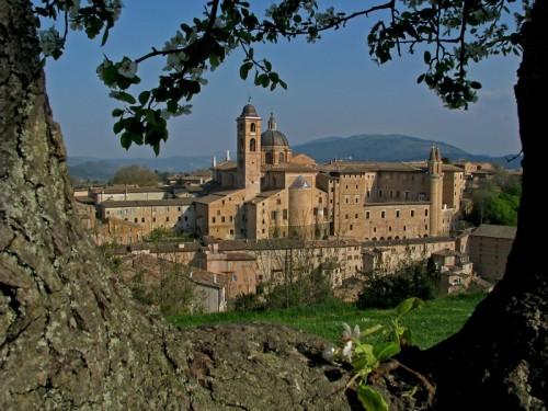Urbino - Urbino