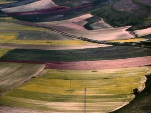 Fioritura di primavera a Castelluccio