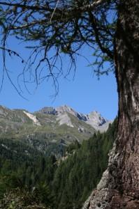 albero che incornicia uno spettacolo naturale