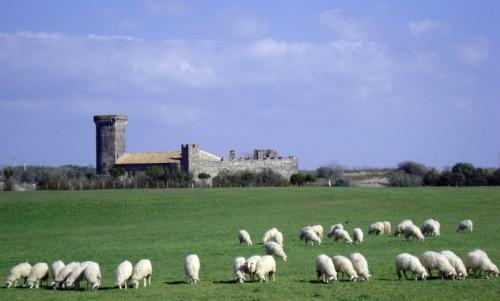Canino - Castello agreste