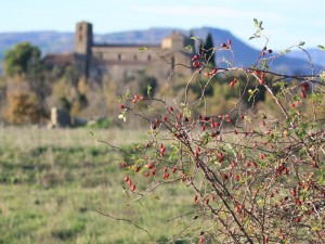Rosa spina su sfondo etrusco (Sovana GR)