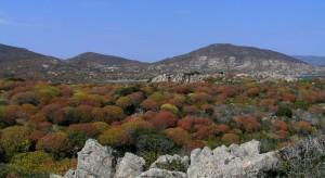 la gariga rifulge all'Asinara
