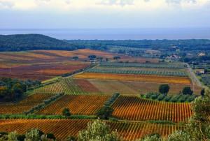 Le vigne nobili di Castagneto Carducci e Bolgheri