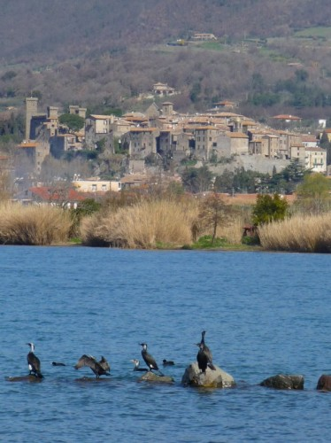 Bolsena - la teoria dei cormorani