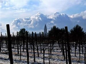 Le vigne e il campanile