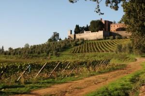 Tra le vigne toscane
