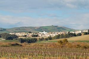 La patria del buon vino