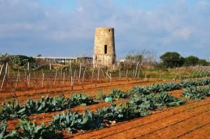 torre Arcana fra gli orti